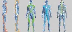 catene muscolari e terapia manuale